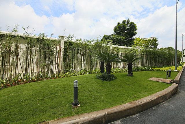 Công tác thi công và trồng cây xanh khu vực đường nội bộ